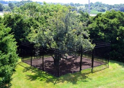 endicott_pear_tree.JPG.662x0_q100_crop-scale
