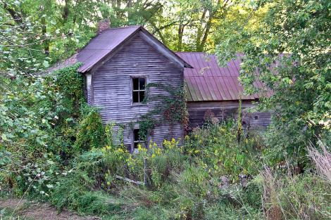 overgrown-abandoned-1800-farm-house-douglas-barnett