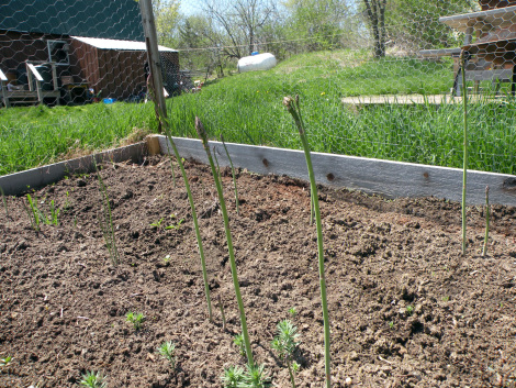 Big green deal garden progress with miracle gro organic for Garden soil deals